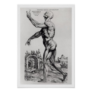 Musculature Structure of a Man (b/w neg & print) Poster