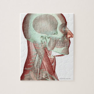 Musculoskeleton of the Head and Neck 2 Jigsaw Puzzle