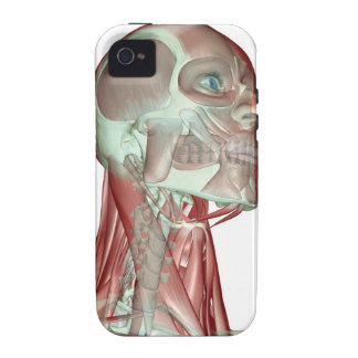 Musculoskeleton of the Head and Neck 3 Case-Mate iPhone 4 Covers