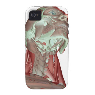 Musculoskeleton of the Head and Neck 4 iPhone 4 Cases