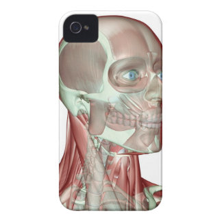 Musculoskeleton of the Head and Neck 5 iPhone 4 Case-Mate Case