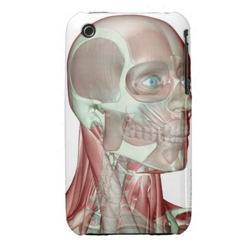 Musculoskeleton of the Head and Neck 5 Case-Mate iPhone 3 Cases