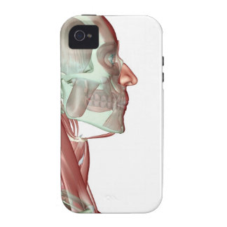 Musculoskeleton of the Head and Neck 6 iPhone 4 Cases