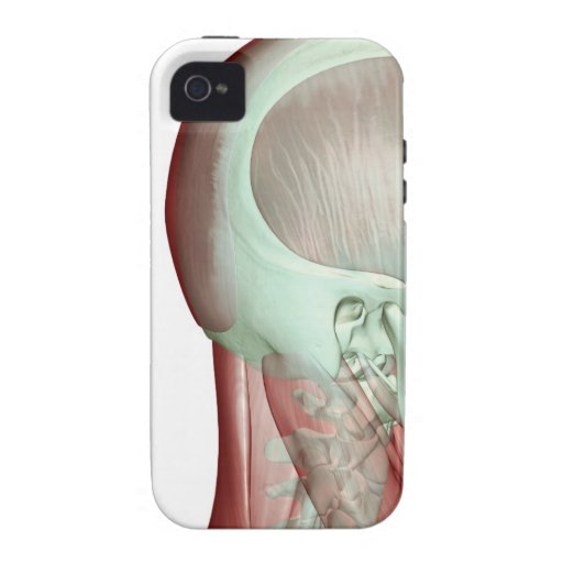 Musculoskeleton of the Head and Neck 8 Case-Mate iPhone 4 Cases