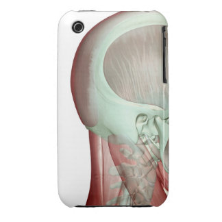 Musculoskeleton of the Head and Neck 8 iPhone 3 Case-Mate Cases