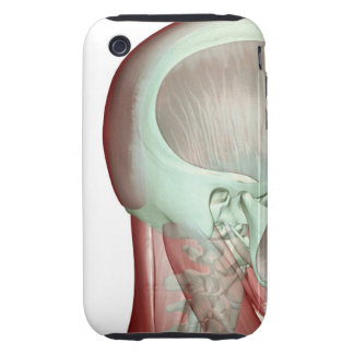 Musculoskeleton of the Head and Neck 8 iPhone 3 Tough Case