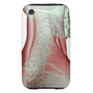 Musculoskeleton of the Neck 3 Tough iPhone 3 Case