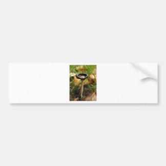 mushroom bumper stickers