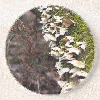 mushroom_downed tree_moss_winter beverage coasters