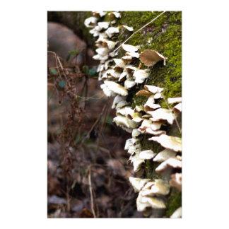 mushroom_downed tree_moss_winter customised stationery