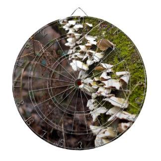 mushroom_downed tree_moss_winter dartboard