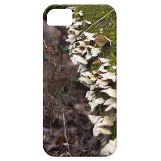 mushroom_downed tree_moss_winter iPhone 5 covers