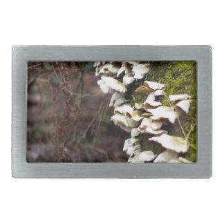 mushroom_downed tree_moss_winter rectangular belt buckle