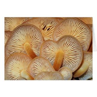 Mushroom Gills of the Orange Mycena Card