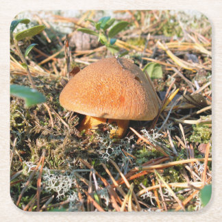 mushroom in a forest square paper coaster