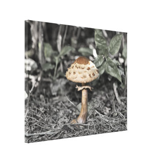 Mushroom in Forest Canvas Print