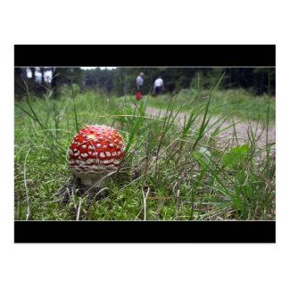 Mushroom In The Grass Post Card