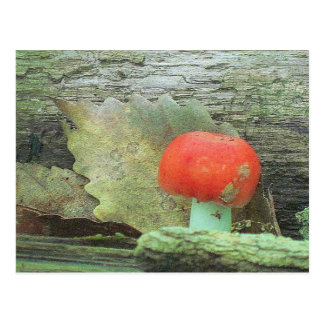 Mushroom In The Woods Postcard