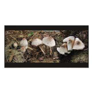 Mushroom Melange ~ Photo