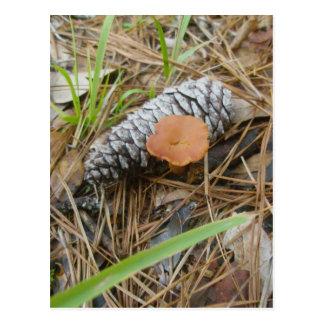 Mushroom & Pinecone OBX Postcard