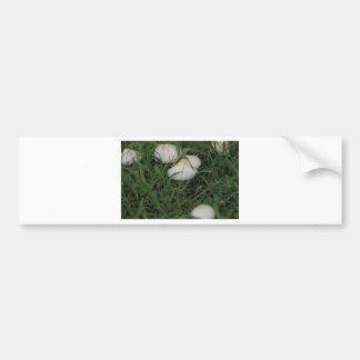 Mushrooms in grass bumper sticker