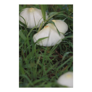 Mushrooms in grass stationery paper