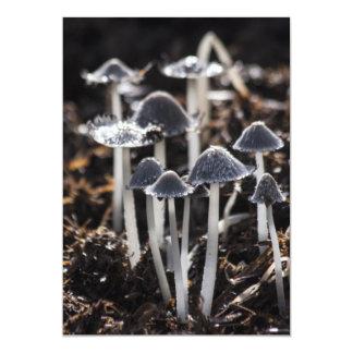 Mushrooms Custom Invites