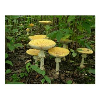 Mushrooms On The Forest Floor Postcard