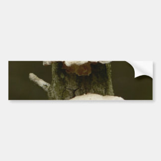 Mushrooms On Tree Bumper Sticker