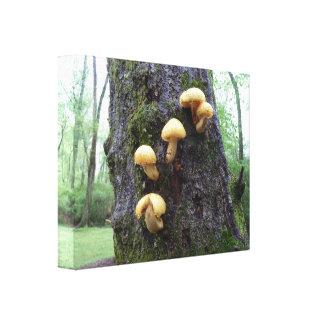 Mushrooms on Tree Canvas Print