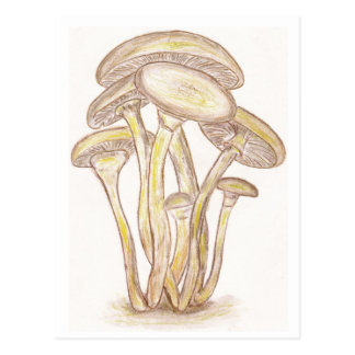 Mushrooms Postcard