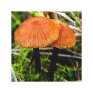 Mushrooms Single Canvas Canvas Print