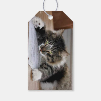 Musical Cat Gift Tags