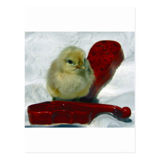 Musical Chick Postcard