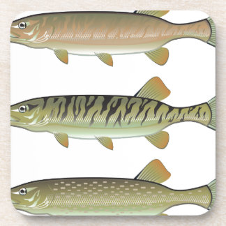 Musky Tiger musky and Northern Pike vector Coasters