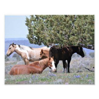 "Mustang Charm 11"" x 8.5"" Pro. Photo Paper(Satin)"
