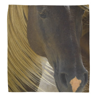 Mustang Horse Bandana