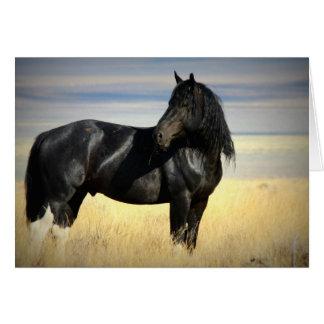 Mustang Stallion greeting card. Card