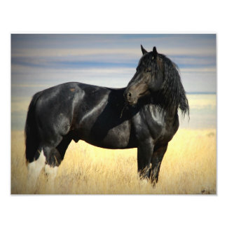 "Mustang Stallion ""SOX"" Art Photo"