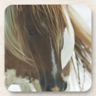 Mustang Wild Horse  Set of Coasters