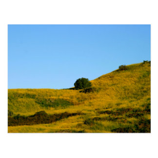 Mustard Grass Post Cards