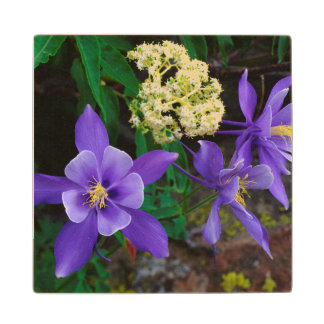 Mutant Columbine Wildflowers Wood Coaster