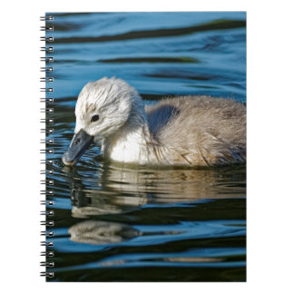Mute Swan Cygnet Notebook