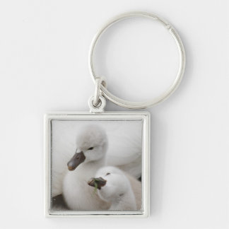 Mute Swan cygnets. Silver-Colored Square Key Ring