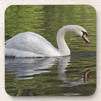 Mute Swan (Cygnus olor) Louisville, Kentucky Beverage Coaster