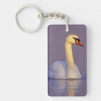 Mute Swan, Cygnus olor,male, Unterlunkhofen, Key Ring