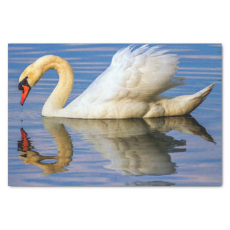 Mute swan, cygnus olor tissue paper