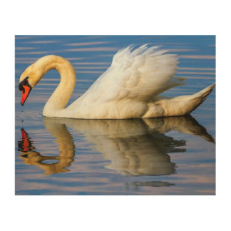 Mute swan, cygnus olor wood wall decor