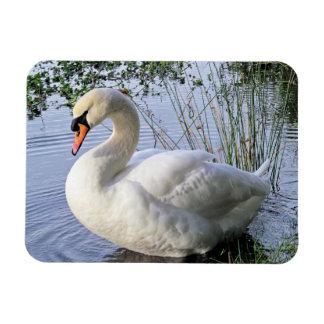 Mute Swan Rectangular Photo Magnet