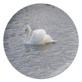 Mute Swan Swimming on the Lake Dinner Plates